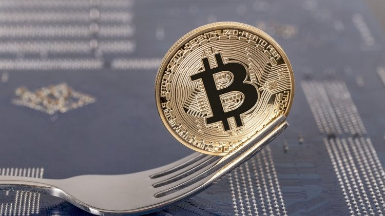 It Is Found That Since 2017's Forking Fiesta, Over 40 Bitcoin Forks Are Down More Than 98%